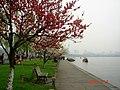 杭州. 西湖. 白堤(一枝桃花一支柳) - panoramio (1).jpg