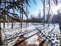 雪后的潍坊学院 2020-12-30 12.jpg