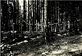 01915 Makówka. Heldenfriedhof im Walde..jpg