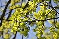 02018 0206 Oberes Santal in Trepcza, Beskiden im Frühling.jpg