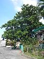 05927jfMonasterio Santa Clara Upper Tuyo Balanga City Bataanfvf 05.JPG
