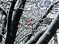1439 - Neve a Milano - Foto Giovanni Dall'Orto 28-Dec-2005.jpg