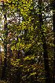 15-11-01-Kaninchenwerder-RalfR-WMA 3304.jpg