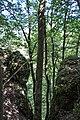 170818-06 Erosion am Albtrauf-2.jpg