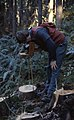 1977. Greg Filip photographing decay on disc. Hemlock Fomes annosus study. (35260554723).jpg