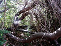 2006 02 Kirstenbosch 10.JPG