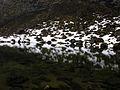 2008-05-20 13-28-32 Iceland Norðurland Eystra Skinnastaður.JPG