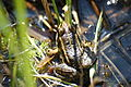 2010-04-18 (29) frog.JPG