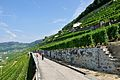 2012-08-12 10-41-56 Switzerland Canton de Vaud Chexbres.JPG