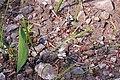 2015.07.11 10.03.34 IMG 2982 - Flickr - andrey zharkikh.jpg