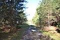 2015 33 Национальный парк Мещёрский - озеро Беленькое.jpg