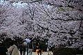 20160403 Himeji-Castle 3448 (26220671864).jpg