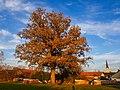 20201031 1623 Dorfbäume in Untereschlbach.jpg