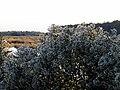 53 Bennetts Point RD Green Pond SC 6881 (12398369094).jpg