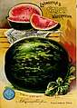 "A. W. Livingston's Sons seed annual - ""true blue."" (1895) (20344168682).jpg"