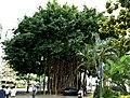 A Mighty Tree (23491500139).jpg