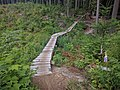A boardwalk along Manbun trail - panoramio.jpg