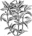 A compleat body of husbandry Fleuron T030997-59.png
