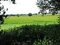 A crop of ripening barley - geograph.org.uk - 1372678.jpg