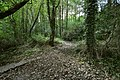 A fork in the footpath in Blackwell Woods - geograph.org.uk - 2064530.jpg