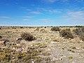 A rocky prairie and blue skies at Cimarron National Grassland (78a686e87e4449dca9d1e5a5262c4835).JPG