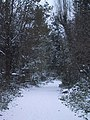 A snow-covered path in Abney Park Cemetery, Stoke Newington - geograph.org.uk - 2188738.jpg
