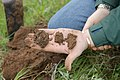 A soil scientist examines soil health. (24816169900).jpg