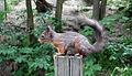 A squirrel in Skansen.JPG