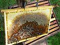 Abeilles et ruches 20.JPG