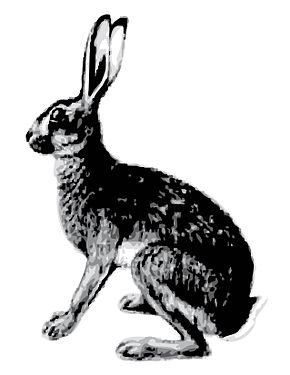 Description de l'image Abyssinian Hare.jpg.