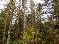 Acadia National Park (8111147219).jpg