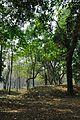 Acharya Jagadish Chandra Bose Indian Botanic Garden - Howrah 2011-01-08 9747.JPG