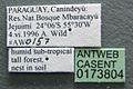 Acromyrmex subterraneus casent0173804 label 1.jpg