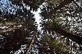Alçakbel kulakkaya - panoramio (2).jpg