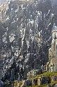 Alkefjellet (js) 16.jpg