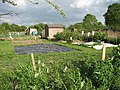 Allotment gardens - geograph.org.uk - 1290709.jpg