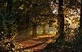 Almost Autumn, Cottingham Park IMG 8214 - panoramio.jpg