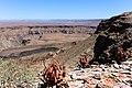 Aloe gariepensis-2163 - kopia - Flickr - Ragnhild & Neil Crawford.jpg
