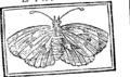 Alphabet royal, ou guide Commode and agreable dans l'art de lire, Pour servir D'Introduction Au Cercle des Sciences Fleuron T188888-9.png