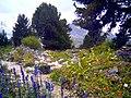 Alps-Garden Schachen.jpg