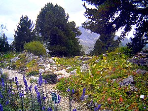 Alpine garden - An alpinum adjacent to the King's House on Schachen in Garmisch-Partenkirchen, Germany