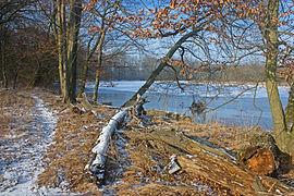 Altwasser der Mulde k4.jpg