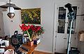 Amaryllis 3-flash Photo Setup (6947673291).jpg