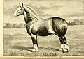 American horses and horse breeding - a complete history of the horse from the remotest period in his history to date. The horseman's encyclopedia and standard authority on horses, embracing breeds, (14598242540).jpg