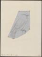 Ampelis phoenicoptera - 1833-1850 - Print - Iconographia Zoologica - Special Collections University of Amsterdam - UBA01 IZ16500371.tif