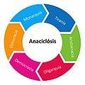Anaciclosis.jpg