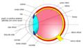 Anatomia de oio.png
