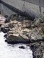 Ancona - scoglio di San Clemente.JPG