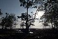 Andaman Islands, Setting sun and tropical trees on the beach.jpg