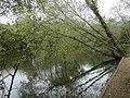 Angling lake, Mudeford Woods - geograph.org.uk - 413521.jpg